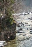 Berken op een rots door de rivier royalty-vrije stock afbeelding