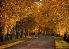 Berksteeg in de herfst Royalty-vrije Stock Afbeeldingen