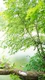 Berktakjes en gevallen boom op de kust van de vijver Royalty-vrije Stock Afbeeldingen