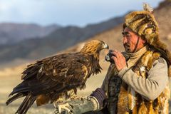 Berkutchi Eagle Hunter while hunting to the hare with a golden eagles on his arms in the mountains of Bayan-Olgii aimag. SAGSAY, MONGOLIA - SEP 28, 2017 Stock Photos