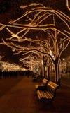 Berlín bajo Navidad de los árboles del tilo Fotos de archivo