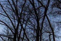 BERLIJN, DUITSLAND - JANUARI 14, 2017: treetops tegen blauwe hemel Royalty-vrije Stock Foto