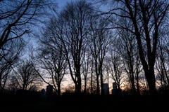 BERLIJN, DUITSLAND - JANUARI 14, 2017: zonsondergang in Tiergarten Royalty-vrije Stock Foto's