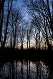 BERLIJN, DUITSLAND - JANUARI 14, 2017: zonsondergang in Tiergarten Stock Foto