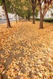 BERLIJN, DUITSLAND - OKTOBER 29, 2012: Stoep in Berlijn met hoogtepunt van Autumn Leaves Stock Foto's