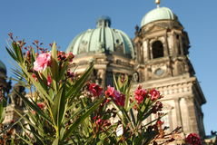 Berlin Cahedral through the flowers Royalty Free Stock Photos