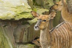 Berlin Elk Deer Stock Foto's