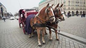 Berlin Niemcy, Nov, - 24, 2018: Dwa pięknego brązu konia i fracht w kwadracie blisko Brandenburg bramy zdjęcie wideo