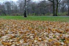berlin tiergarten Fotografia Stock