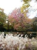 Berlin Tiergarten in de Herfst Stock Afbeeldingen