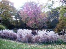 Berlin Tiergarten in de Herfst Stock Afbeelding