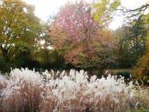 Berlin Tiergarten in de Herfst Royalty-vrije Stock Afbeeldingen