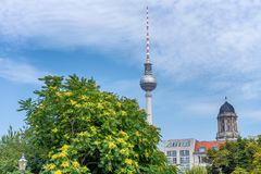Berlin TV Tower among city trees, Germany.  Stock Photo