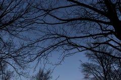 BERLIN TYSKLAND - JANUARI 14, 2017: treetops mot blå himmel Royaltyfria Bilder