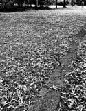 Berlin visitant le pays Regard artistique en noir et blanc Photos libres de droits