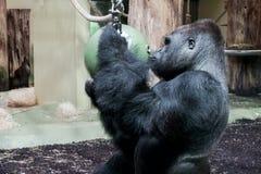 Berlin Zoological Garden imagem de stock royalty free