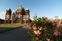 Berliner Dom with Fernsehturm and oleander V2 Royalty Free Stock Photos