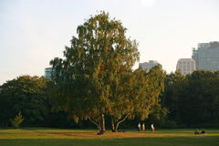 berliner park Obraz Royalty Free