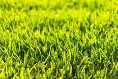 Bermuda gräs royaltyfria bilder