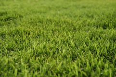 Bermuda grass. A new cut bermuda grass ready for the new event Royalty Free Stock Image