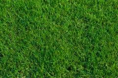 Bermuda grass background. Stock Photo