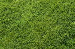 Bermuda grass top view. A newly trim bermuda grass ready for the next event Stock Image