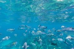 Bermuda Island. Best of Bermuda Beaches, activities Royalty Free Stock Image