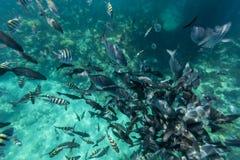 Bermuda Island. Best of Bermuda Beaches, activities Royalty Free Stock Photo