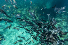 Bermuda Island Royalty Free Stock Photo