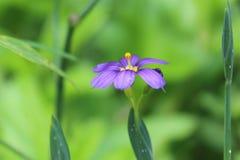 Bermuda kwiaty Zdjęcia Royalty Free