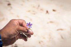 Bermuda National Flower Royalty Free Stock Photos