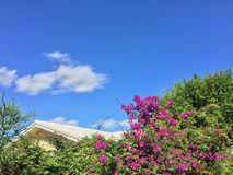 Bermuda roof and pink bush flowers Stock Image