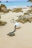 Bermuda strand Royaltyfria Bilder