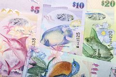 Bermudian Dollar a background royalty free stock images