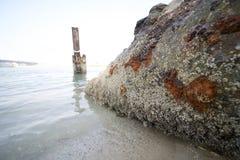 Bernache entièrement sur la plage photos stock
