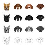 Bernard, breed, suit, and other web icon in cartoon style.Dog, animal, home, icons in set collection.