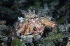 Bernard l'ermite et anémones symbiotiques Photos libres de droits