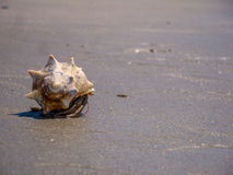 Bernard l'ermite sur Carolina Beach Images libres de droits