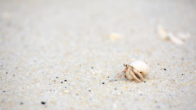 Bernard l'ermite sur la plage de sable Photographie stock libre de droits