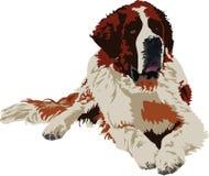 bernard trakenu psa święty Zdjęcie Royalty Free