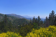 Bernardino National Forest Immagini Stock Libere da Diritti