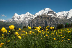 Berner Oberland, Ελβετία Στοκ Εικόνες