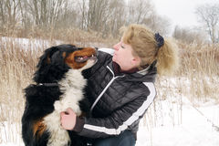Bernese mountain dog. With woman royalty free stock image