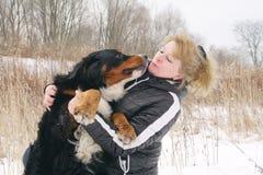 Bernese mountain dog Royalty Free Stock Image