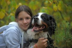 Bernese Mountain Dog and girl teenage girl. Walking in the park Royalty Free Stock Image