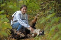 Bernese Mountain Dog and girl teenage girl. Walking in the park Royalty Free Stock Photos