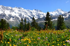 Bernese Oberland Zdjęcia Royalty Free