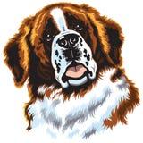 Bernhardiner-Hund Lizenzfreie Stockfotografie