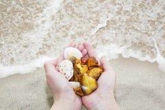 Bernsteinfarbig Drei einzigartiges transparentes Stück Bernstein auf der Palme des Meeres Sunstone als natürliches Mineral auf de stockbild
