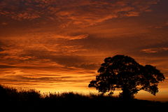 Bernsteinfarbiger Sonnenaufgang Stockfotos
